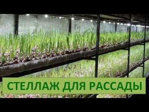 Сад огород на балконе