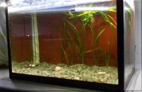 Простейший генератор CO2 для аквариума