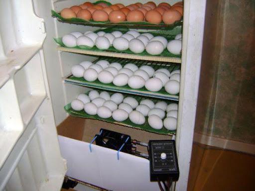 Самодельный инкубатор из старого холодильника